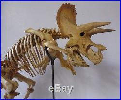 Kaiyodo Triceratops Skeleton Resin Model Kit 1/20 Scale